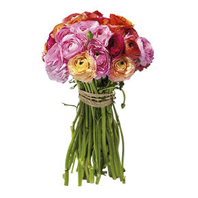 En serie Flores Revista ED
