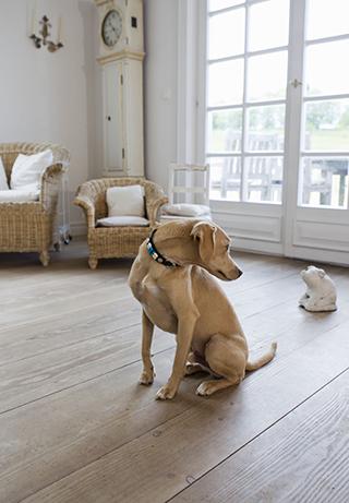 Piso de madera en casas con perros grandes
